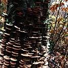 0903 2018.11.06 Mushroom Tree...