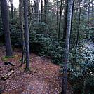 0916 2018.11.08 Campsite Next To Stony Creek by Attila in Views in Virginia & West Virginia