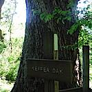 0949 2020.06.02 Keffer Oak Sign by Attila in Trail & Blazes in Virginia & West Virginia
