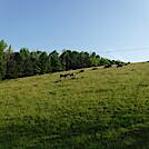 0954 2020.06.02 Pasture North Of Keffer Oak by Attila in Views in Virginia & West Virginia