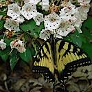 0963 2020.06.02 Butterfly