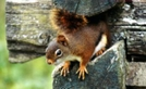 Squirrel In Smokies by rainmakerat92 in Views in North Carolina & Tennessee