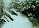 Snow In Smokies by rainmakerat92 in Views in North Carolina & Tennessee