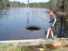 """Chatter Does Battle With Ri's Own """"nessie"""" On North-south Trail April 2008 by Tinker in Other Trails"""