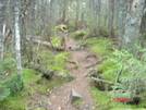 Trail In Hundred Mile Wilderness, Maine