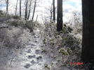 Footprints In Ice On At Harriman State Park