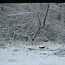 A little surprise - snow