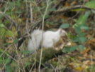 Here's Something You Don't See Every Day! Albino Squirrel In Pa. by Tinker in Other