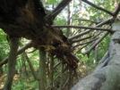 Breakneck Ridge - Hudson Highlands by brocken spectre in Trail & Blazes in New Jersey & New York