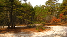 Pine Barrens - Mullica River Trail by brocken spectre in Other Trails