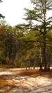 Pine Barrens - Mullica River Trail
