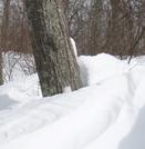 Buried Blaze, Snp, February 2010 by ATsawyer in Trail & Blazes in Virginia & West Virginia