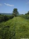 Shays Field