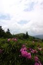 Rhododendron- Grassy Ridge Bald
