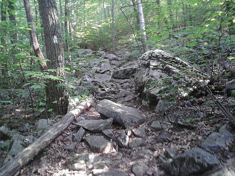 Trail near Algo shelter (CT)
