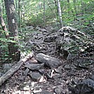 Trail near Algo shelter (CT)