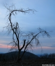 Lone Tree by bigcranky in Views in North Carolina & Tennessee