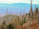 Dead Trees by bigcranky in Views in North Carolina & Tennessee