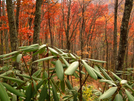 Fall Color In Smokies by bigcranky in Views in North Carolina & Tennessee