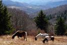 Hiking At Mt Rogers, Va, October 2010 by bigcranky in Views in Virginia & West Virginia