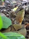 Copperhead In The Garden