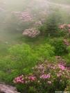 Rhododendron Gap by bigcranky in Views in Virginia & West Virginia
