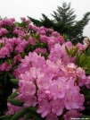 Rhododendron Gap by bigcranky in Views in Virginia & West Virginia