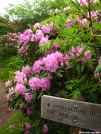 Rhododendron Gap