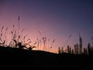 Sunrise At The Barn