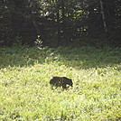 Shenandoah NP - Big Meadow