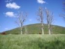 Cows on hill VA