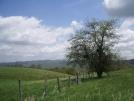Tree on old farm in VA by mountaineer in Trail & Blazes in Virginia & West Virginia