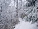 Snowy trail 2 - Smokys April 05