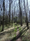 Trail in south by mountaineer in Trail & Blazes in North Carolina & Tennessee