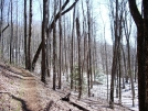 Trail in Georgia by mountaineer in Trail & Blazes in Georgia