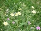 wildflowers in VA by mountaineer in Flowers