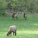 Wild Elk by Mr Breeze in Other