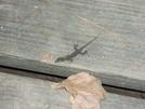 The Photogenic Lizard by Sierra Echo in Other