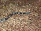 A Snake I Named Adam by Sierra Echo in Snakes
