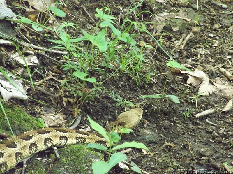 GA. snake