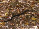 Snake On Trail,va.