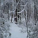Snowy Trail in Georgia