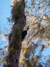 Florida Wildlife by solstice in Birds