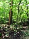 Lightning Strike by Ramble~On in Trail & Blazes in Virginia & West Virginia