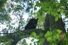 Bear In A Tree by Ramble~On in Bears
