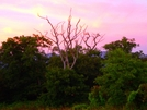 The Bob Bald Dragon Tree by Ramble~On in Views in North Carolina & Tennessee