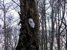 """""""visitor"""" Face by Ramble~On in Trail & Blazes in North Carolina & Tennessee"""