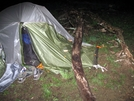 When Trees Attack by Ramble~On in Tent camping