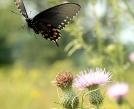 Flutterby by Ramble~On in Flowers