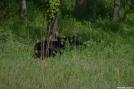 Black Bear Family Portrait by Ramble~On in Bears